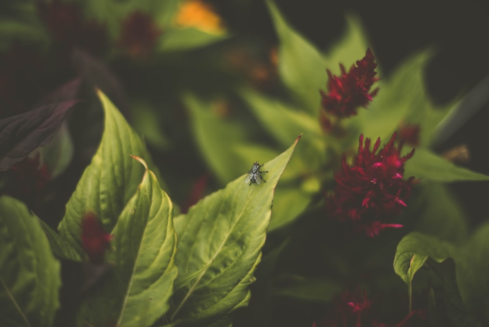 black winged insect perched on green leaf plant