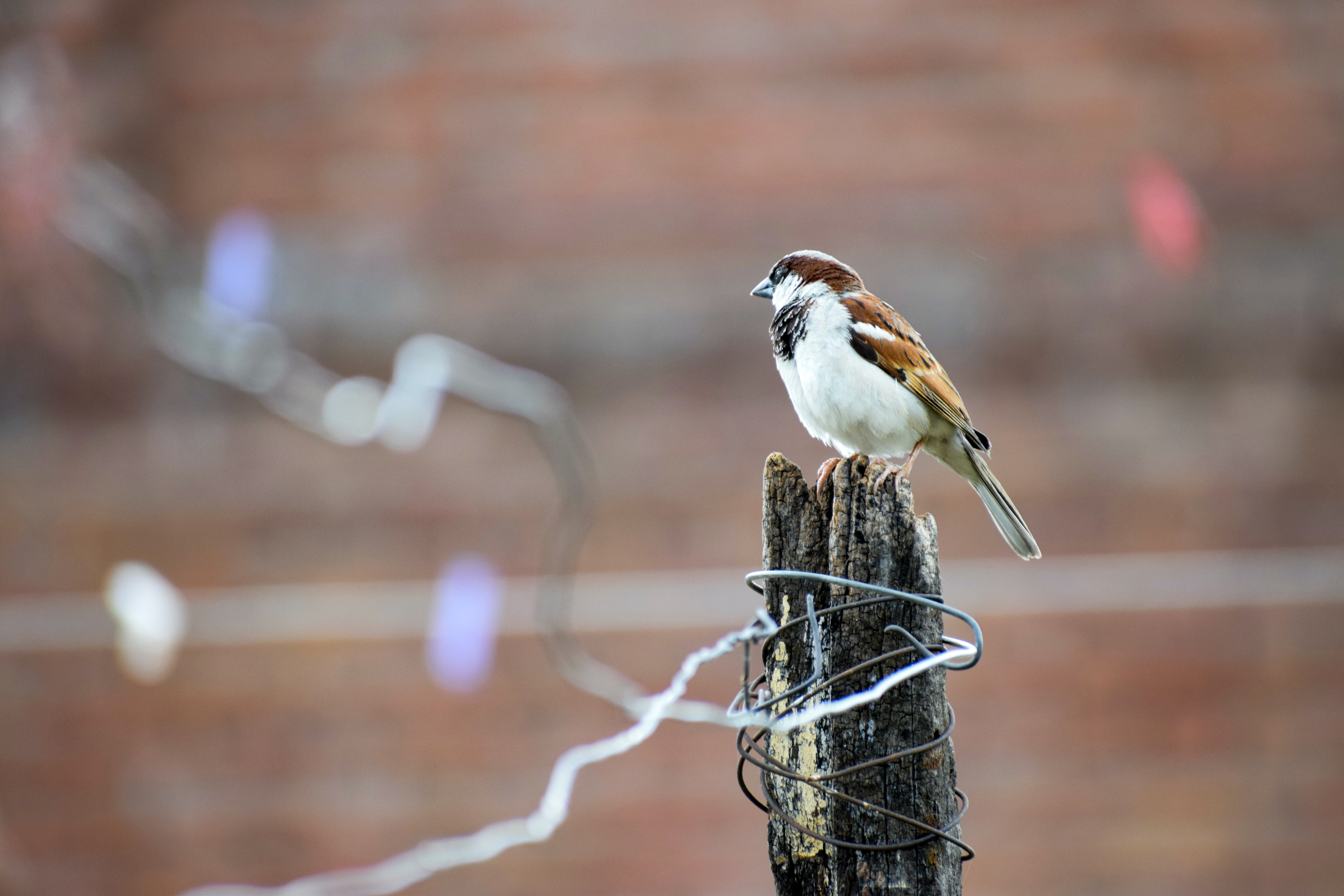 A small brown bird perched on a wooden post wrapped in wire