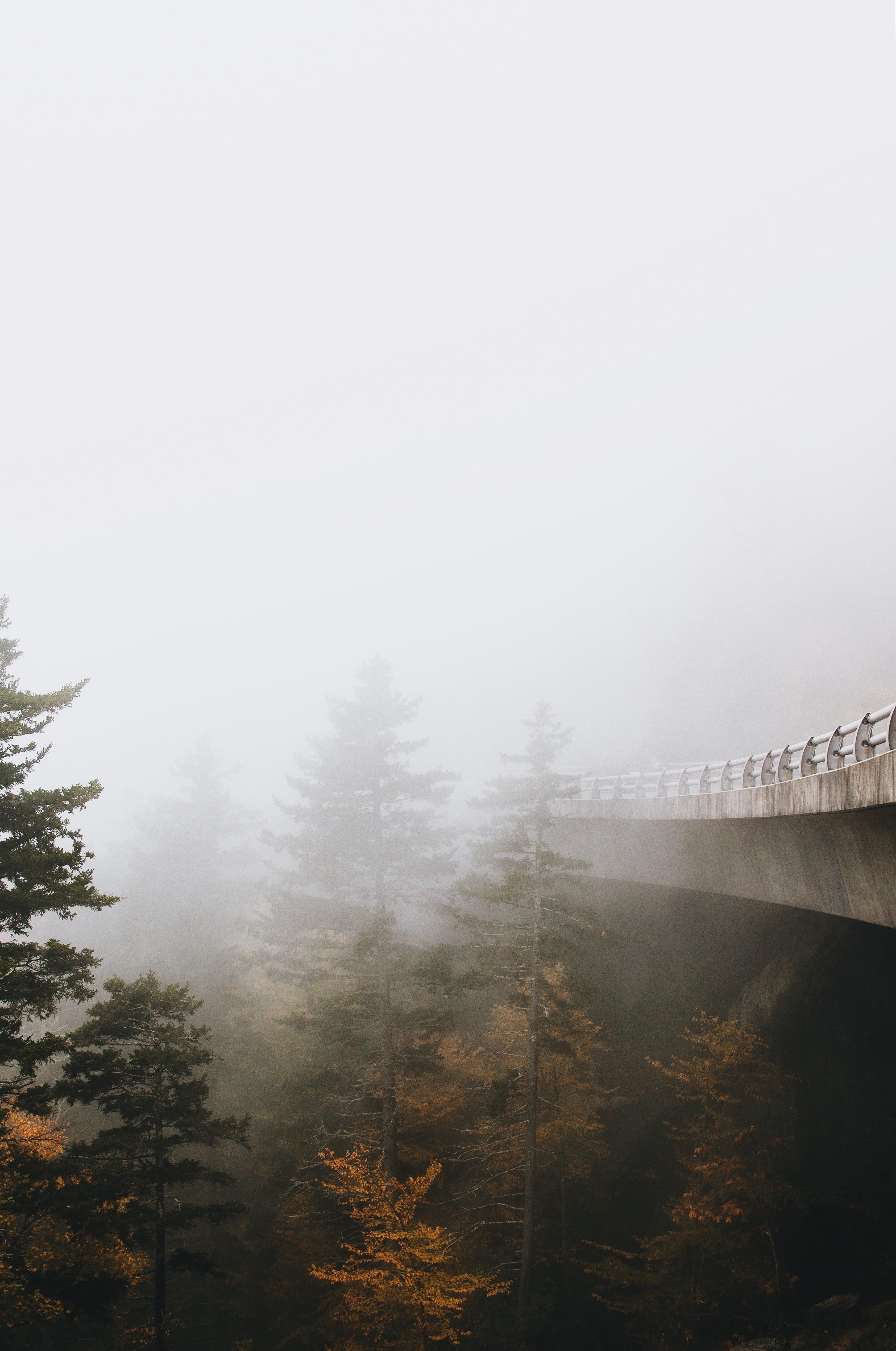 Concrete bridge over foggy forest pines