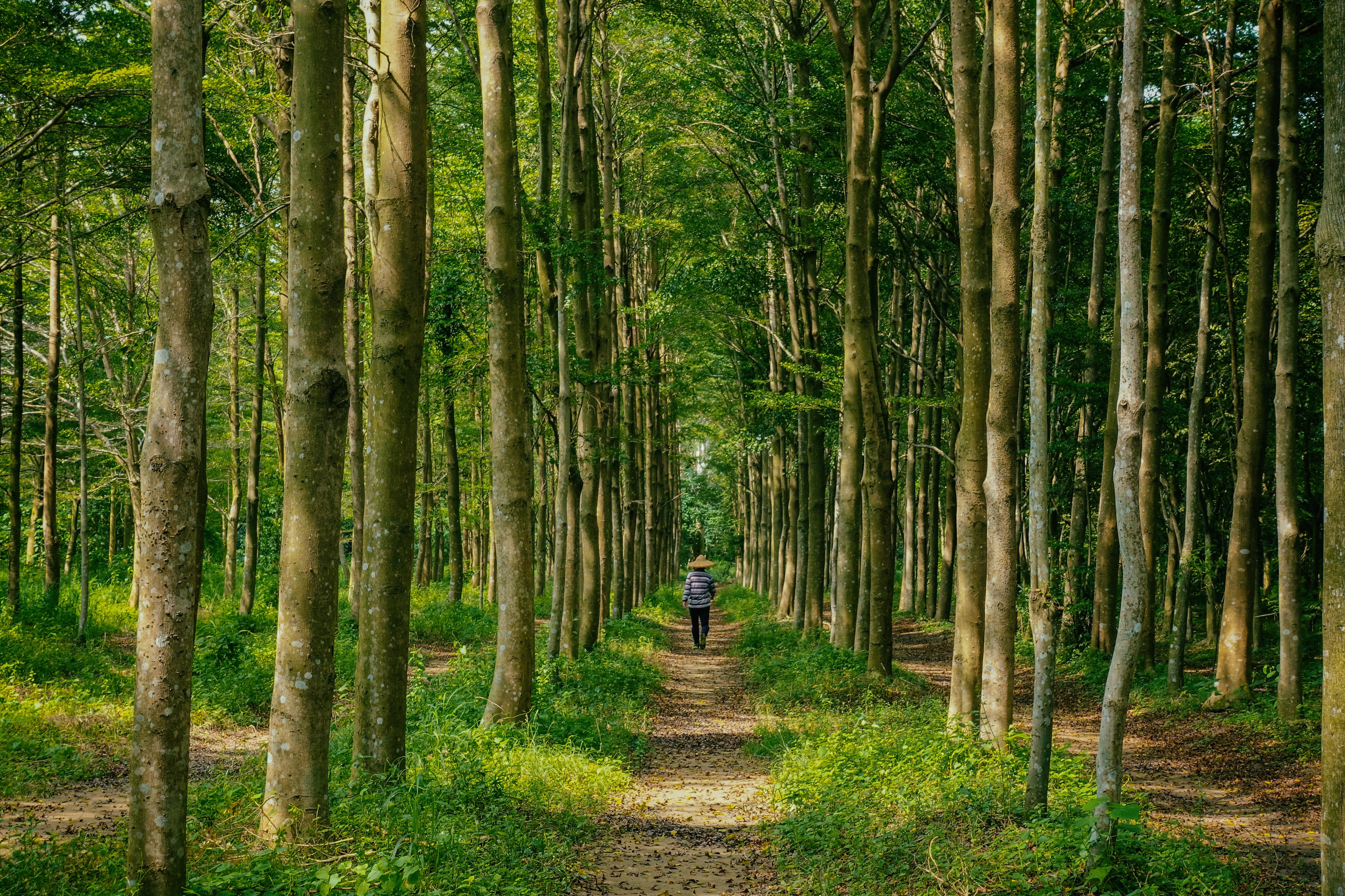 person walking on pathway inside the forest