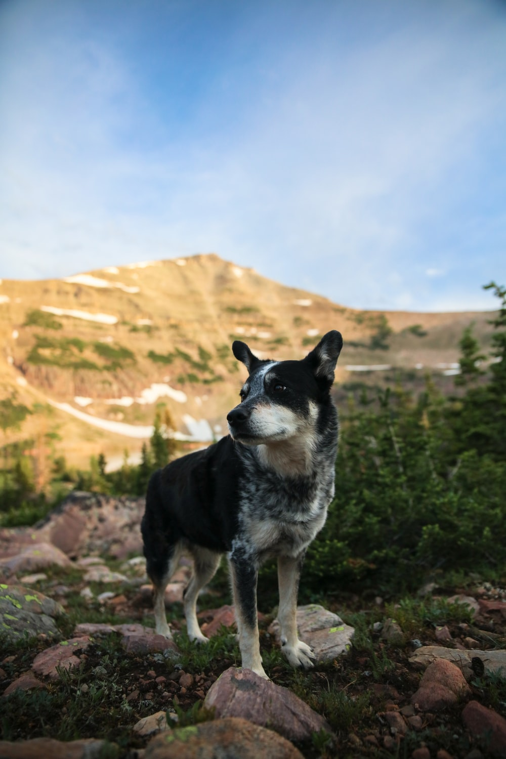 dog on mountain range near trees