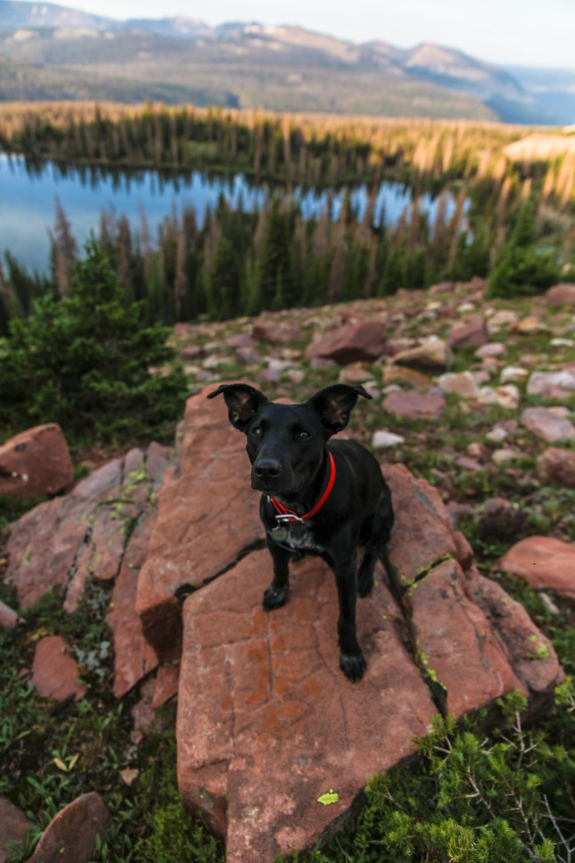 black short coat medium dog on brown rock near body of water during daytime