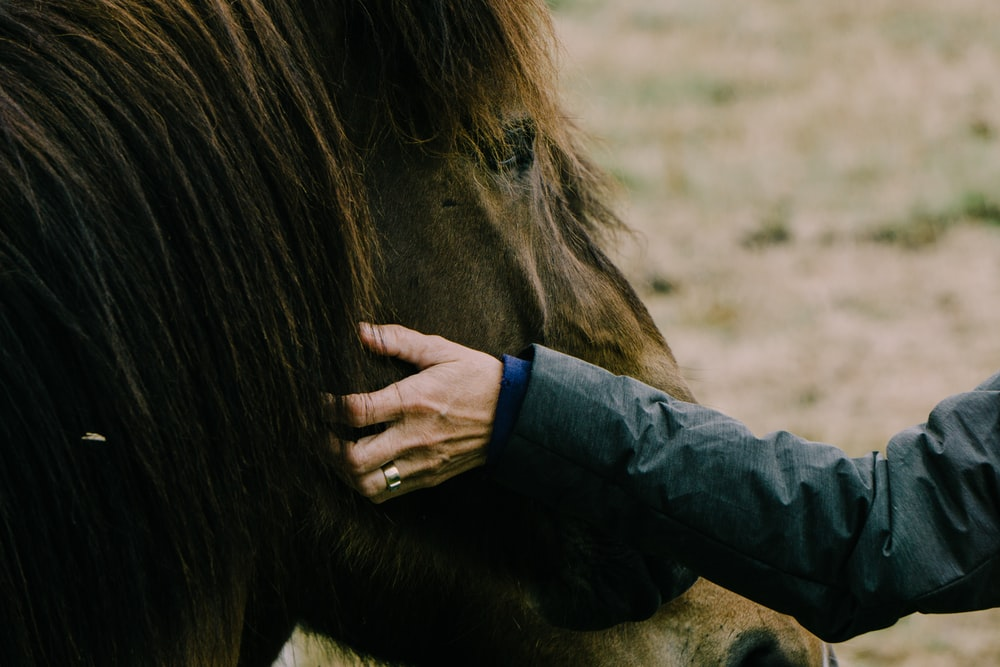 person touching horse face