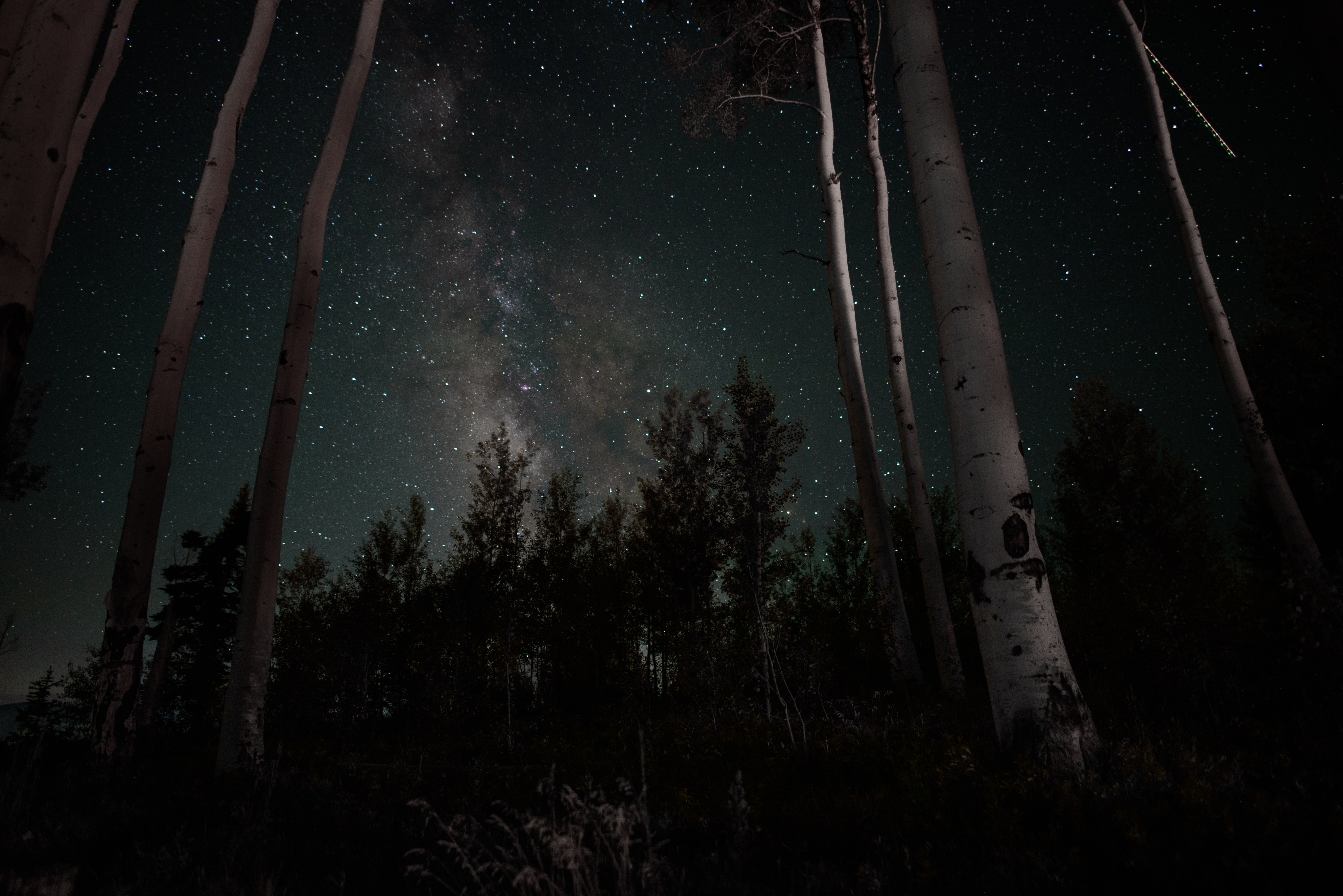 Tall birch trees under a starry sky in Silverthorne
