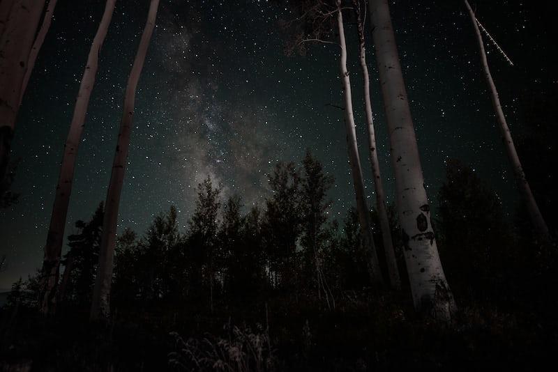 森の中からみる星空