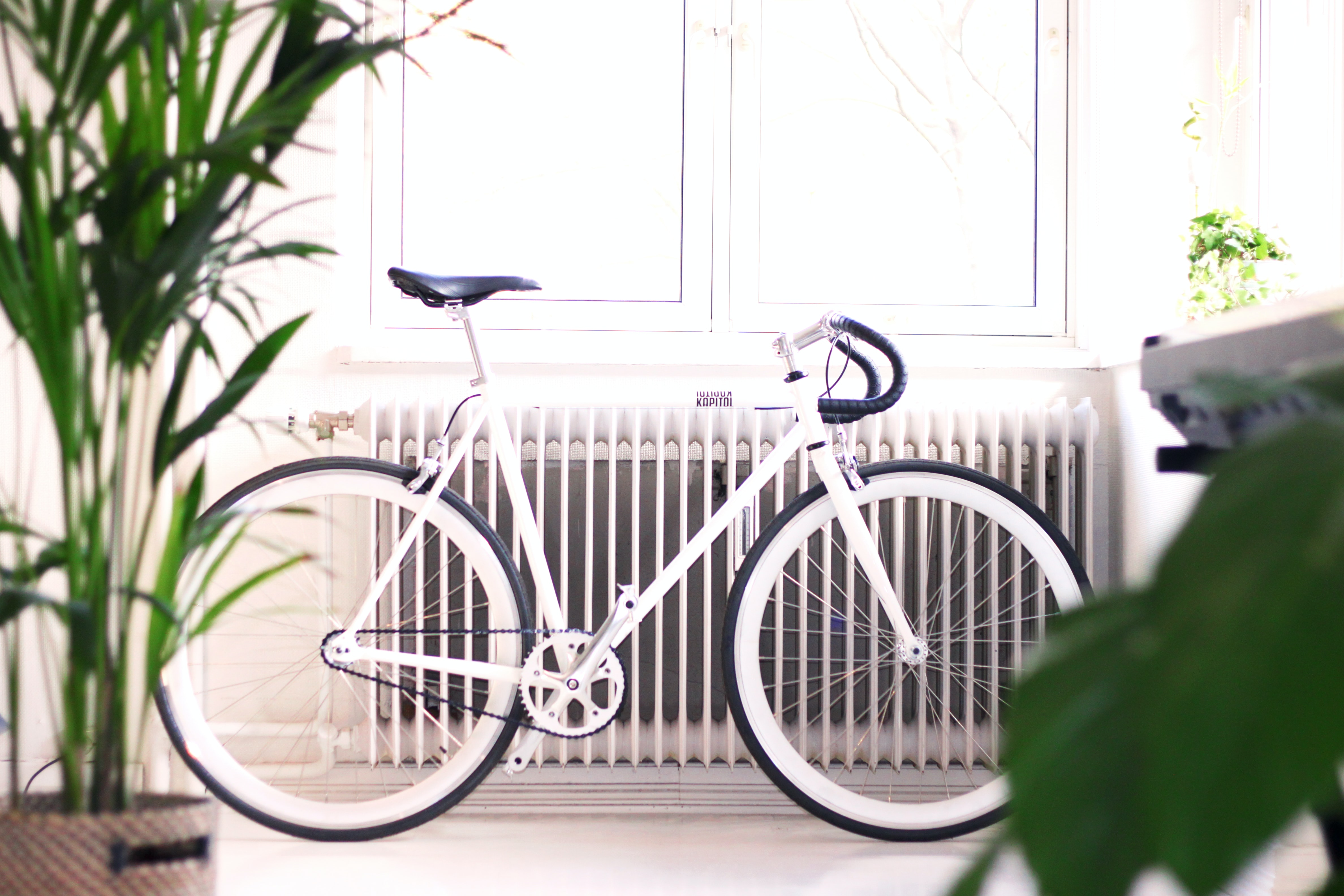 White bike leaning against radiator in doors with plant near window with light streaming in, Oslo