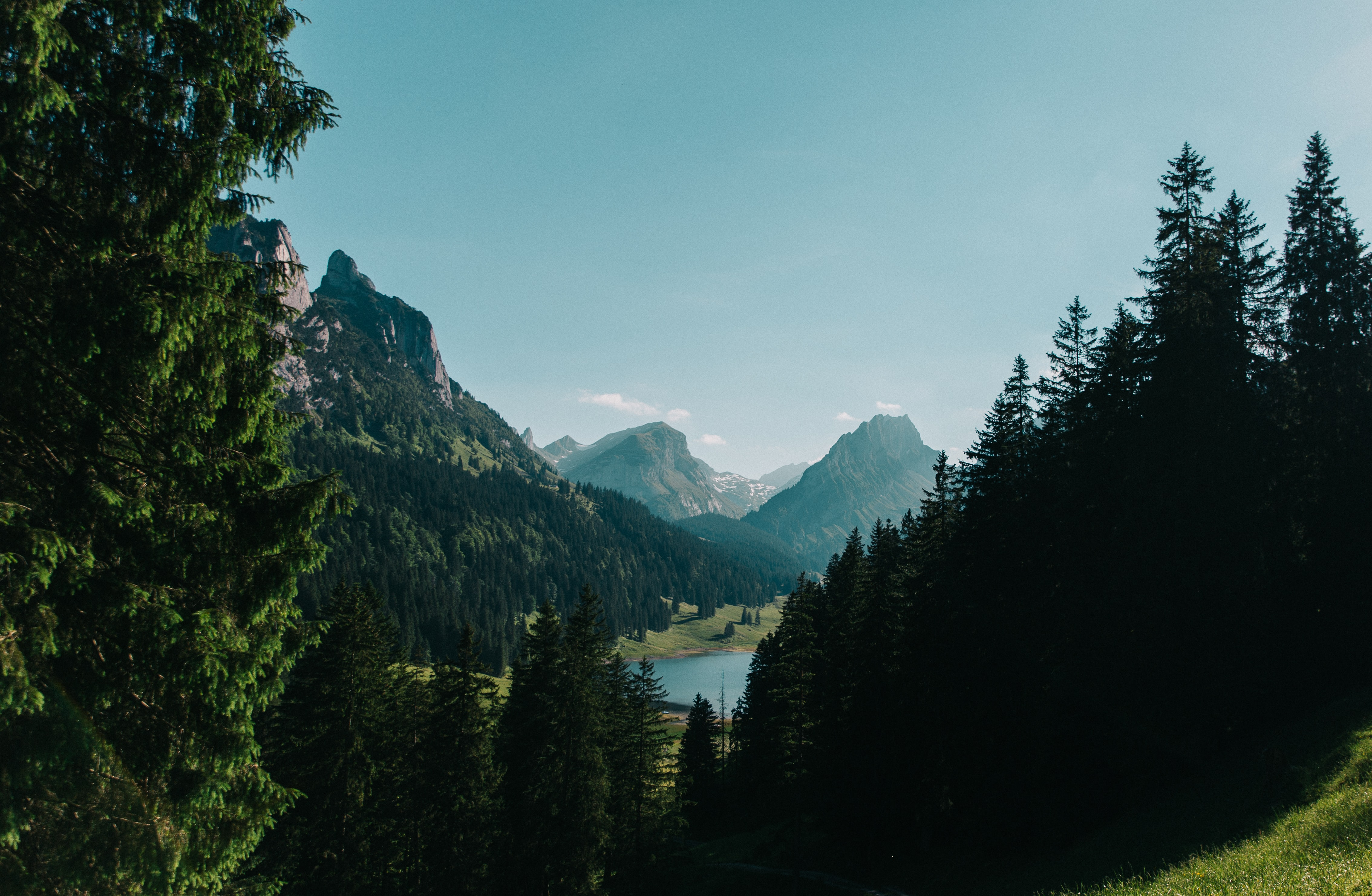 pine trees in front of mountain ranges