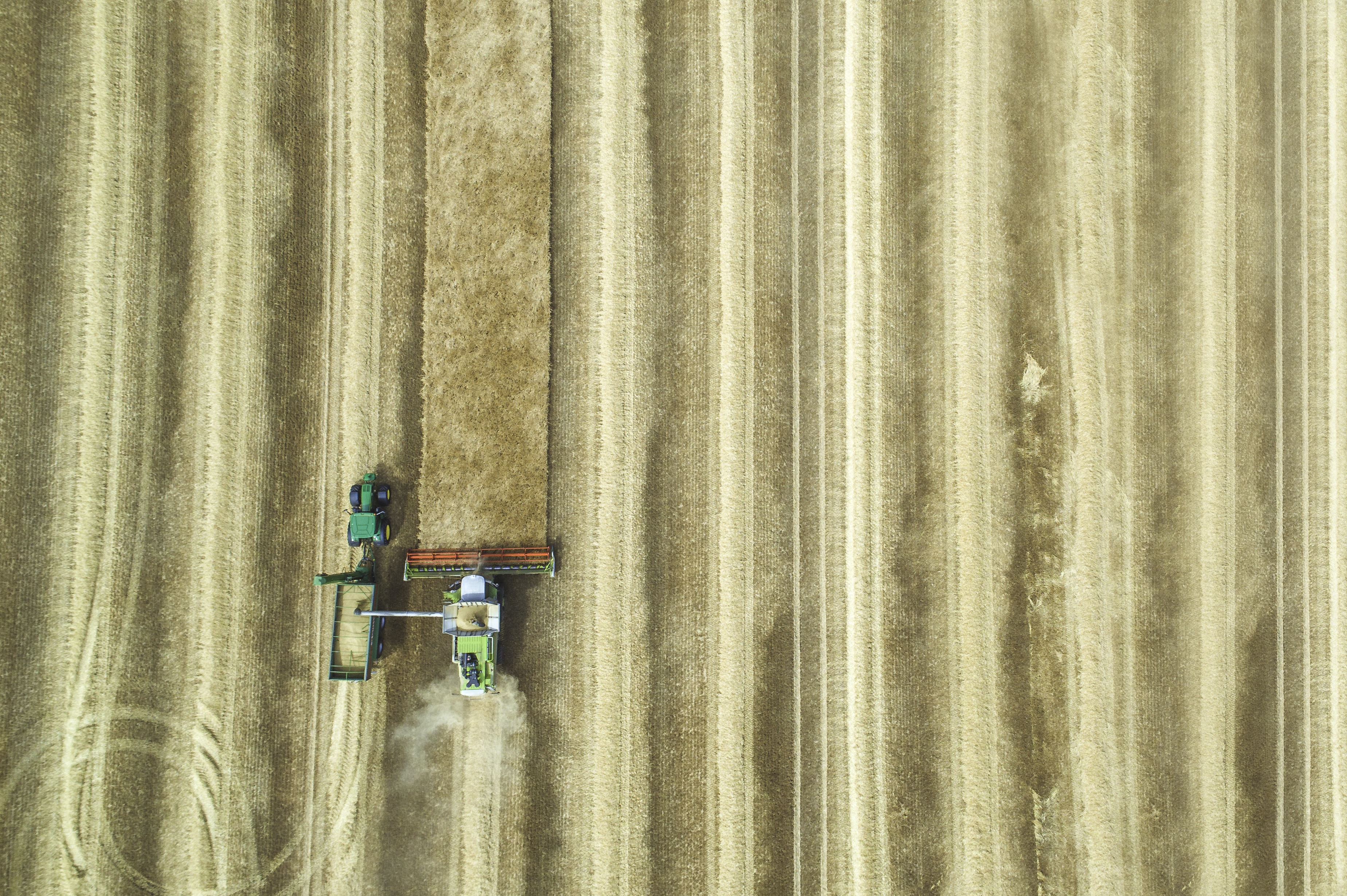 A drone shot of a combine harvester working in a golden field