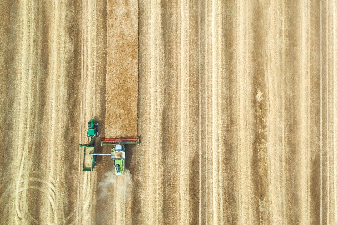 Bird's eye view of a combine cutting through the final strip of wheat during the summer Harvest in the UK