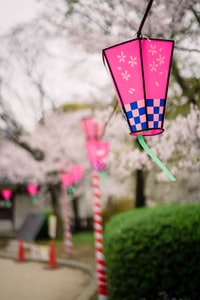 selective focus photo of pink and blue lanterns hanged on string