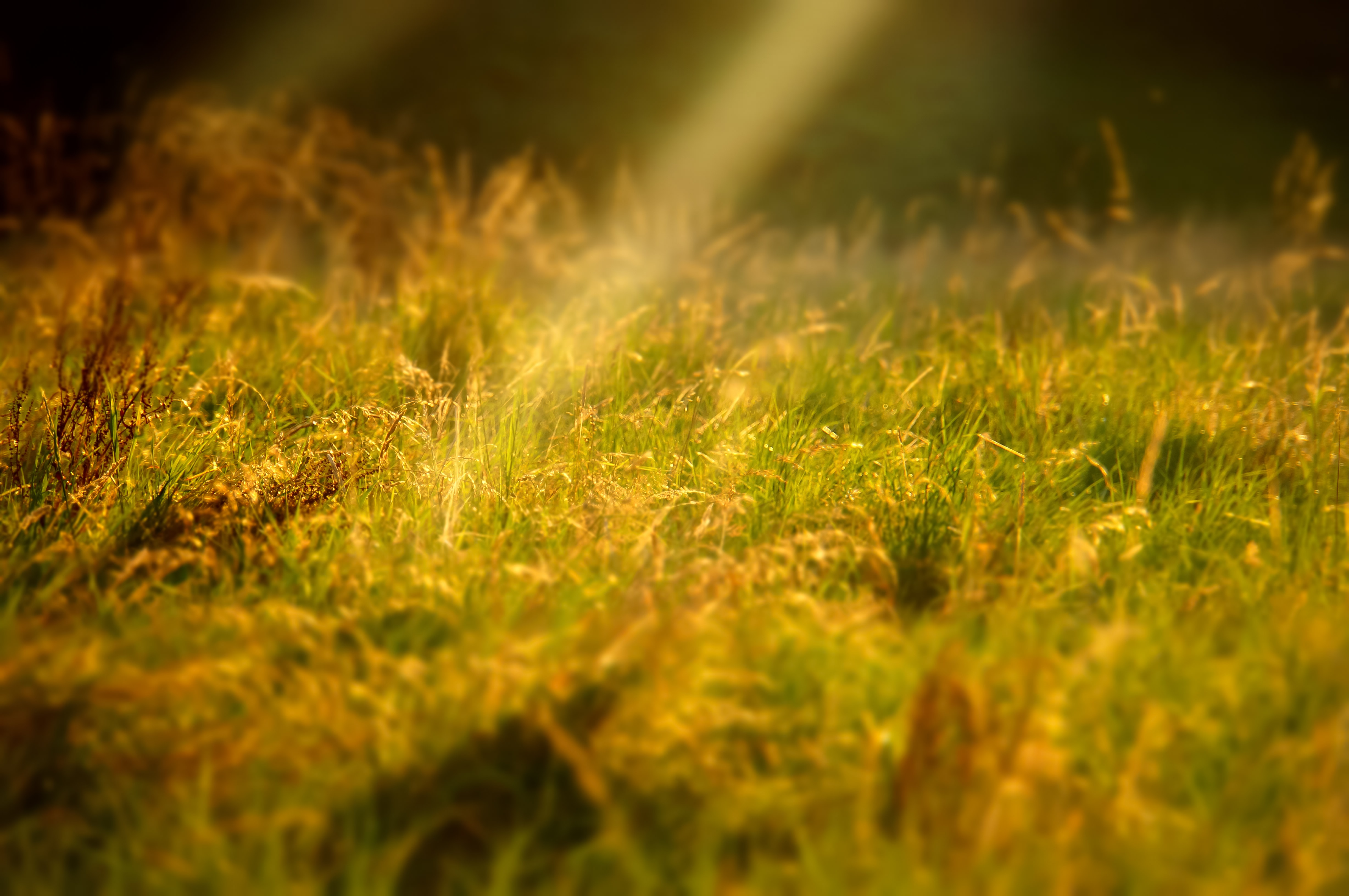 Sun beams glow yellow on a field of grass and flowers