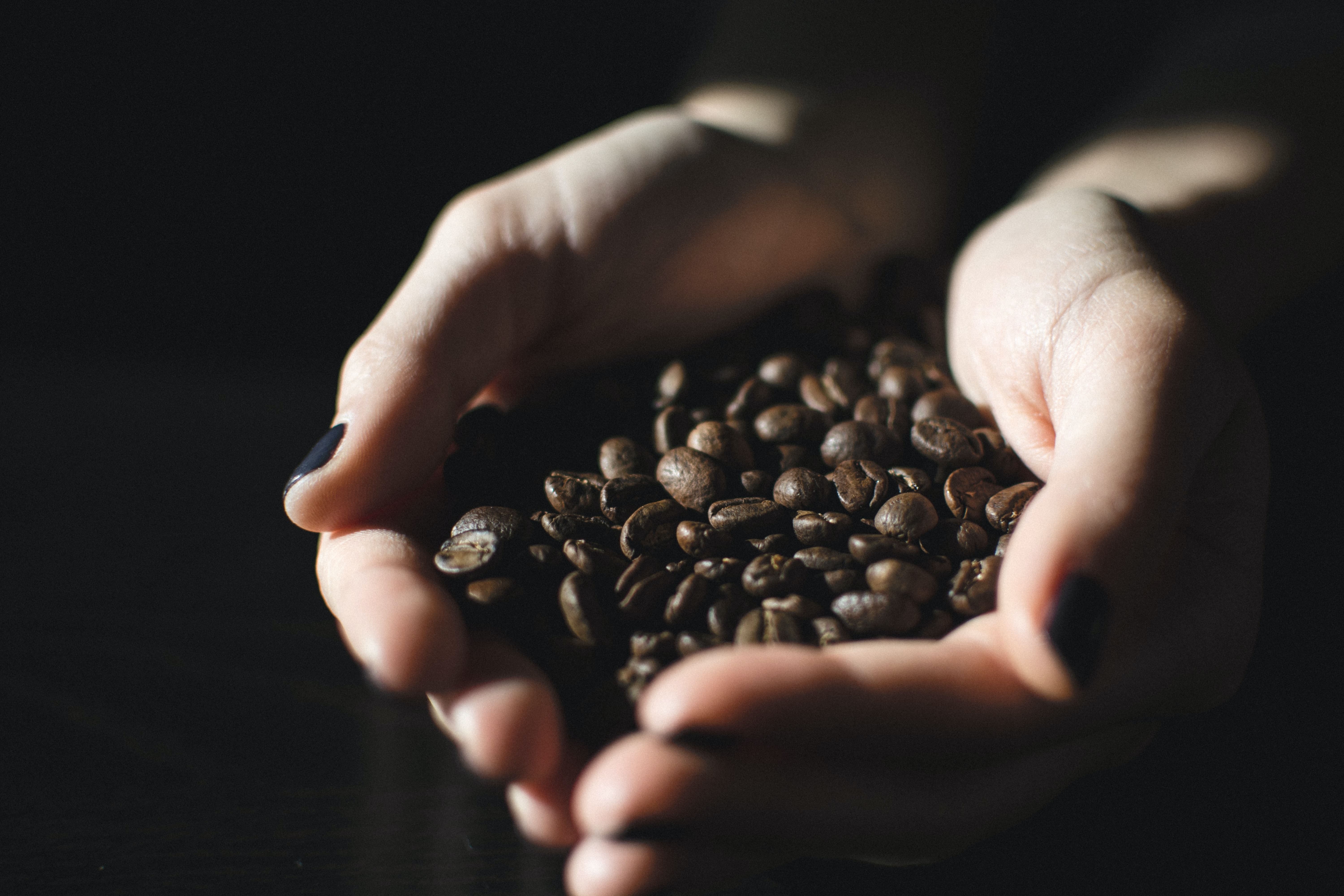 A woman's hands with fingernails painted black holding dark brown coffee beans