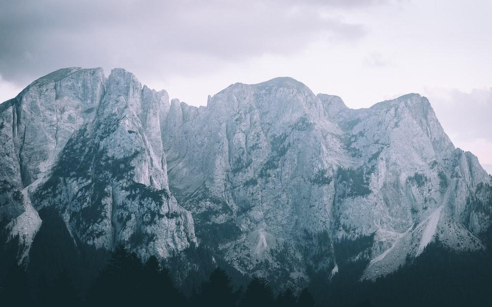 silhouette of trees under white rocky mountain
