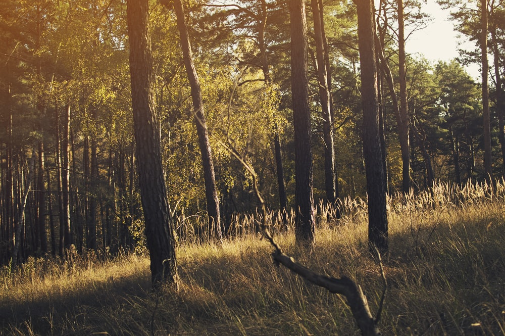 green leafed trees under brown field