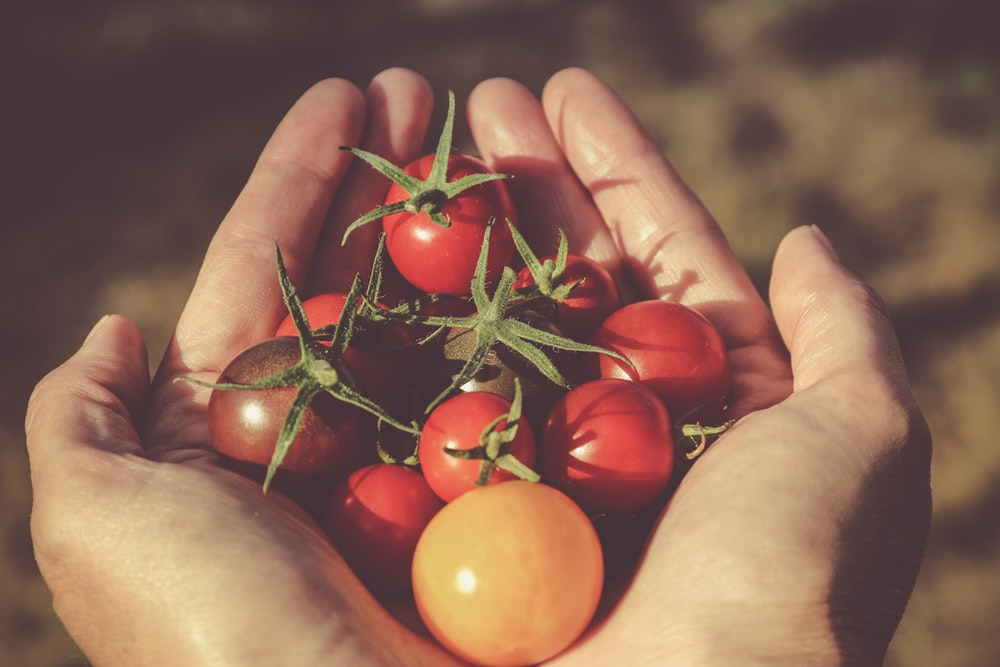 person holding red and orange tomatoes