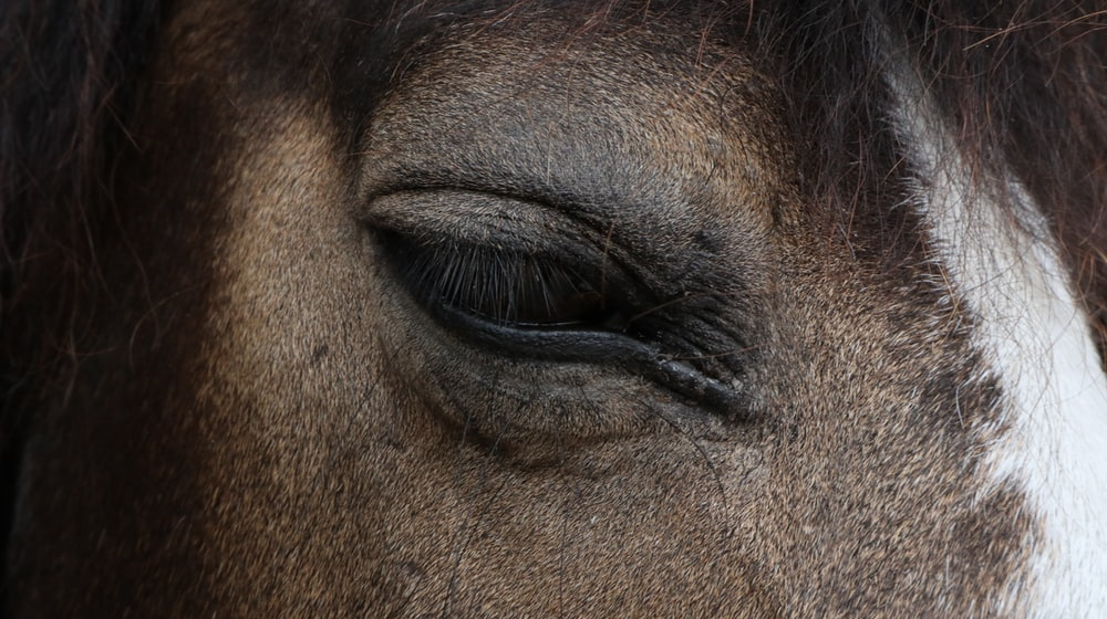 right horse eye