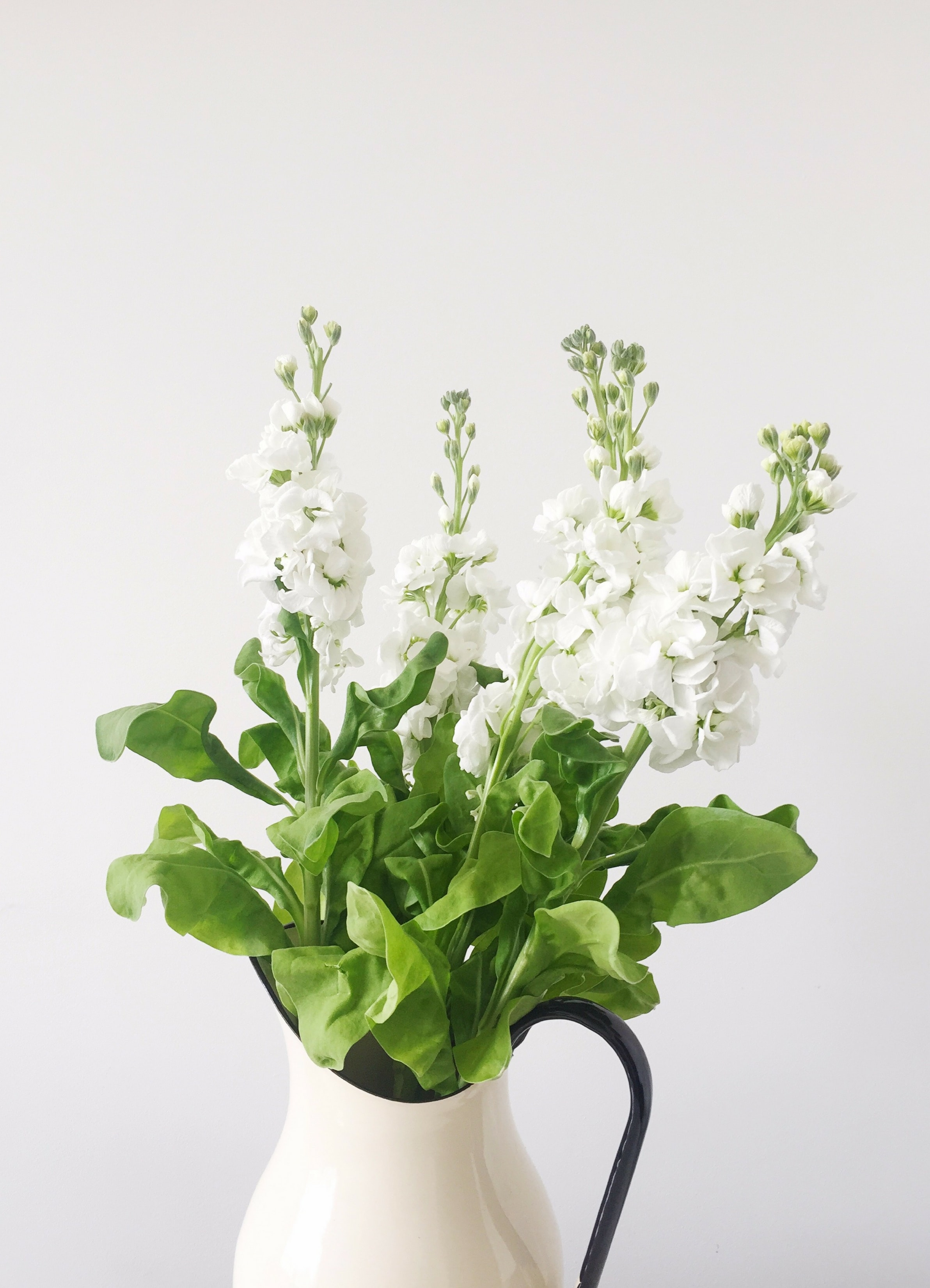 white petaled flower in white vase