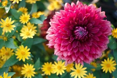 3905. Virágok