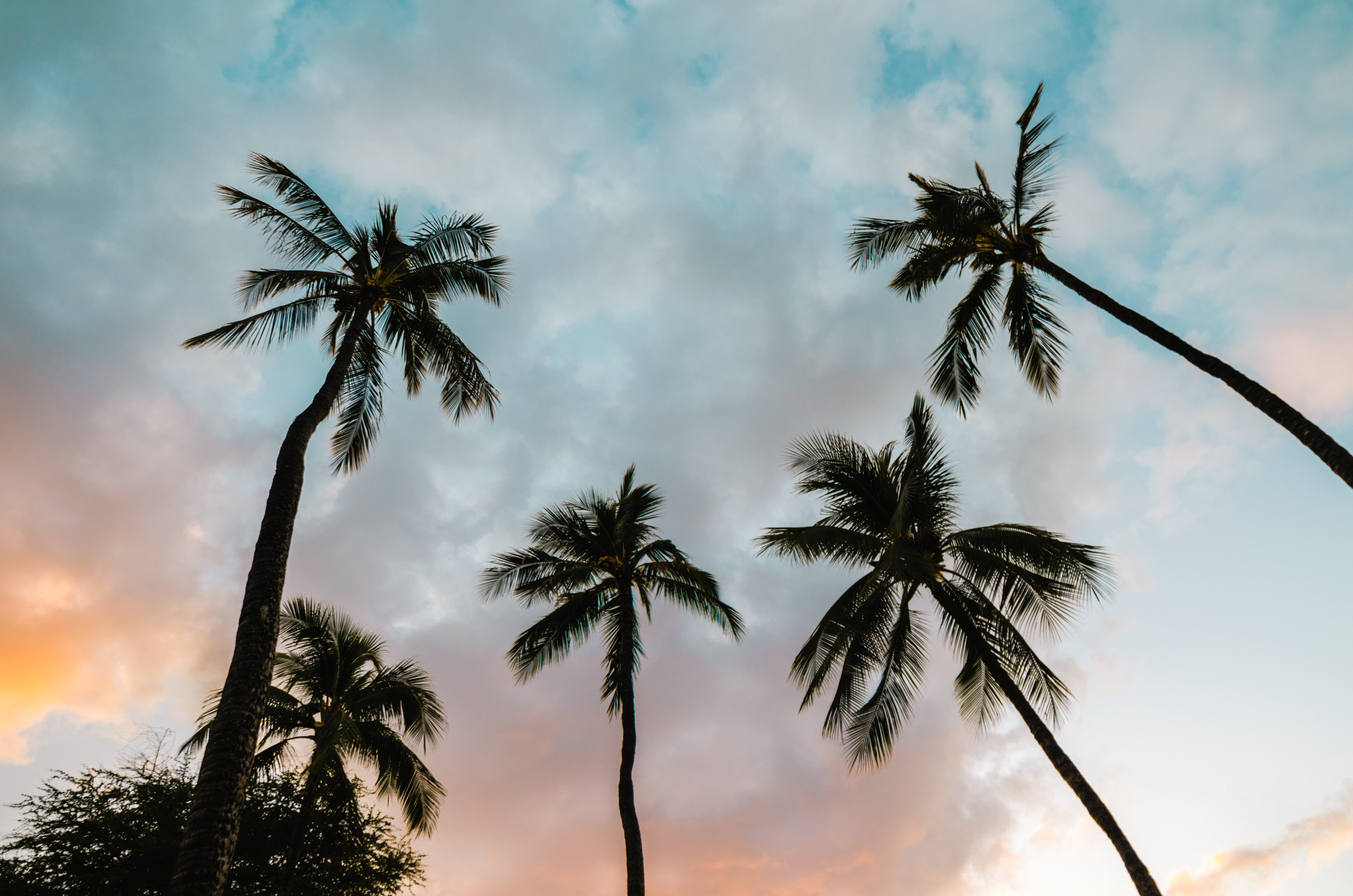 Looking up at a blue-orange cloudy sky with tall pine trees in Hawaii