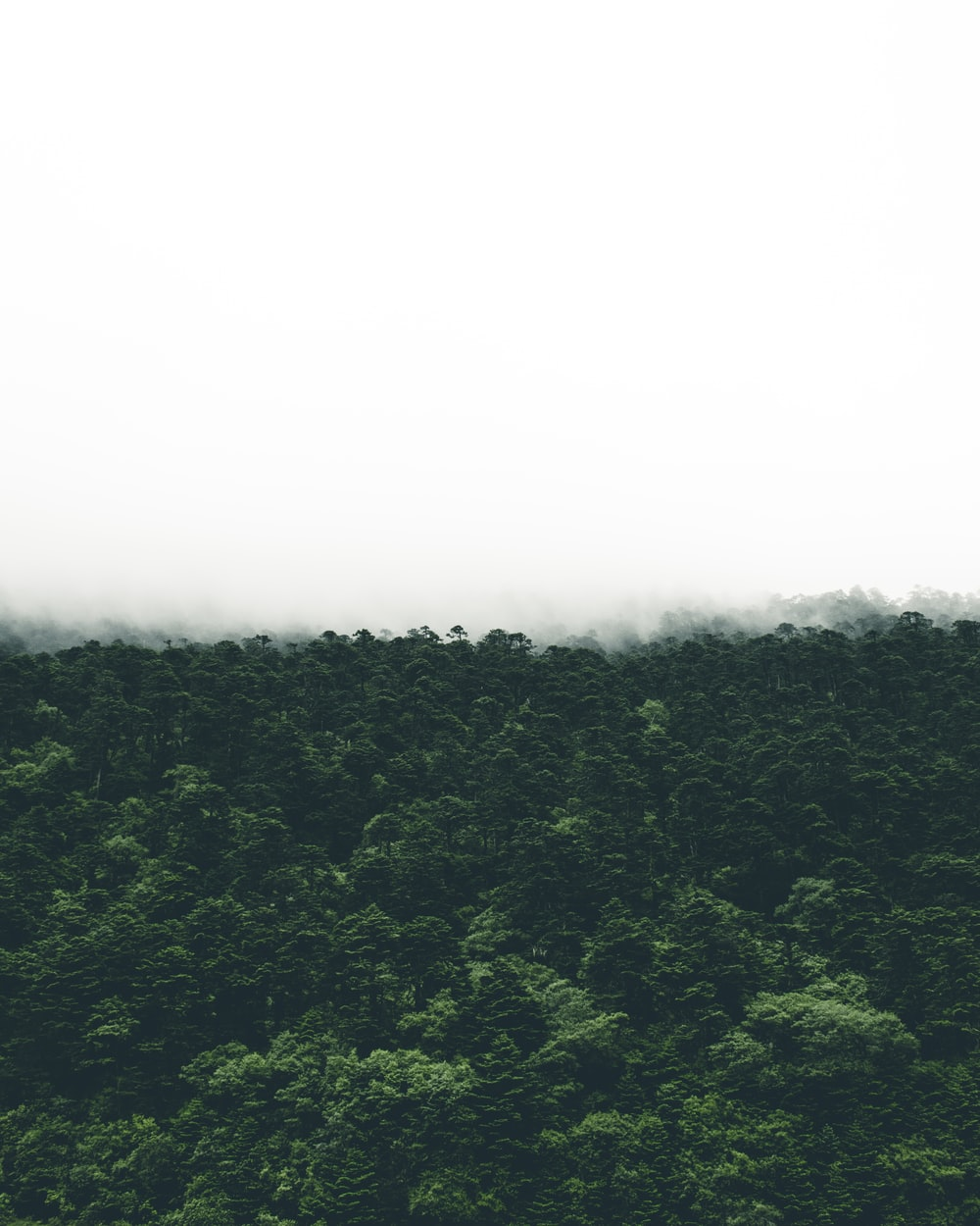 photo of green trees during foggy day