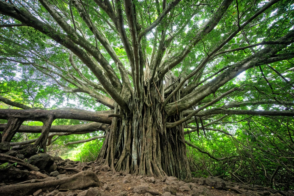 macro shot of brown tree