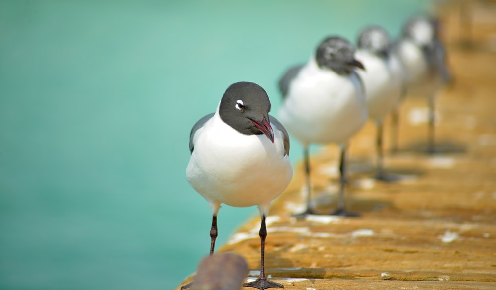 shallow focus photography of bird on dock during day