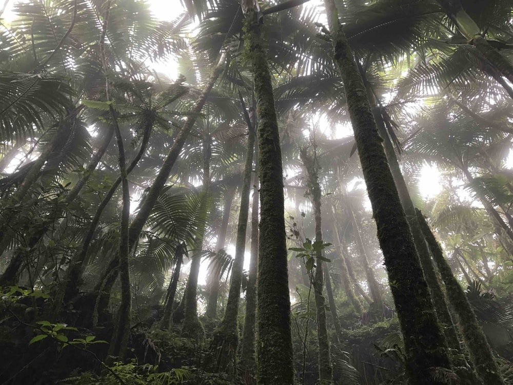 Rain Forest Pictures [Stunning!] | Download Free Images on
