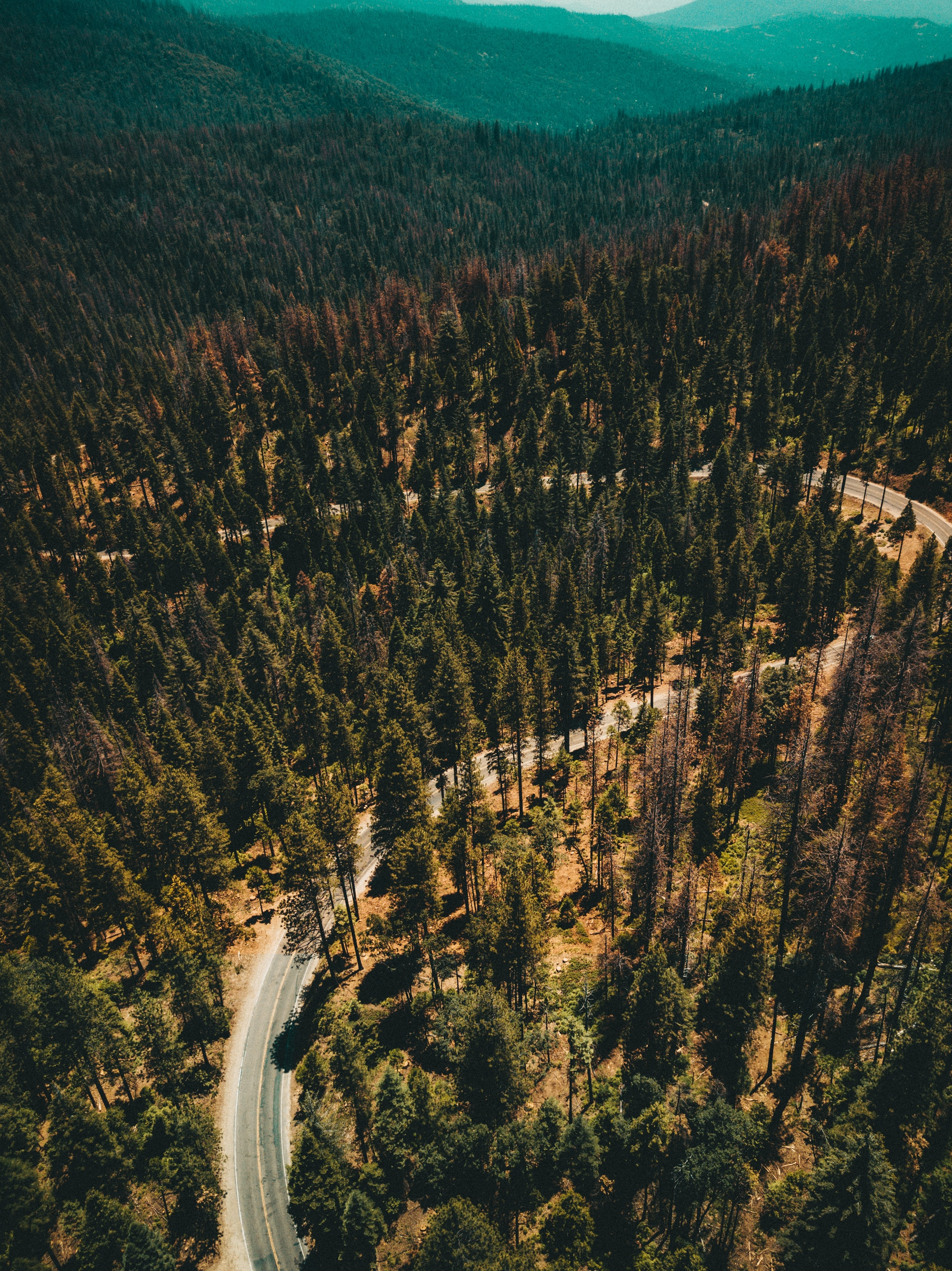 mountain cover with trees with road pavement aerial photography