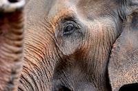 close up photo of elephant's head