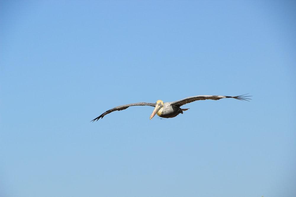white bird flying under clear blue sky photo taken during daytime