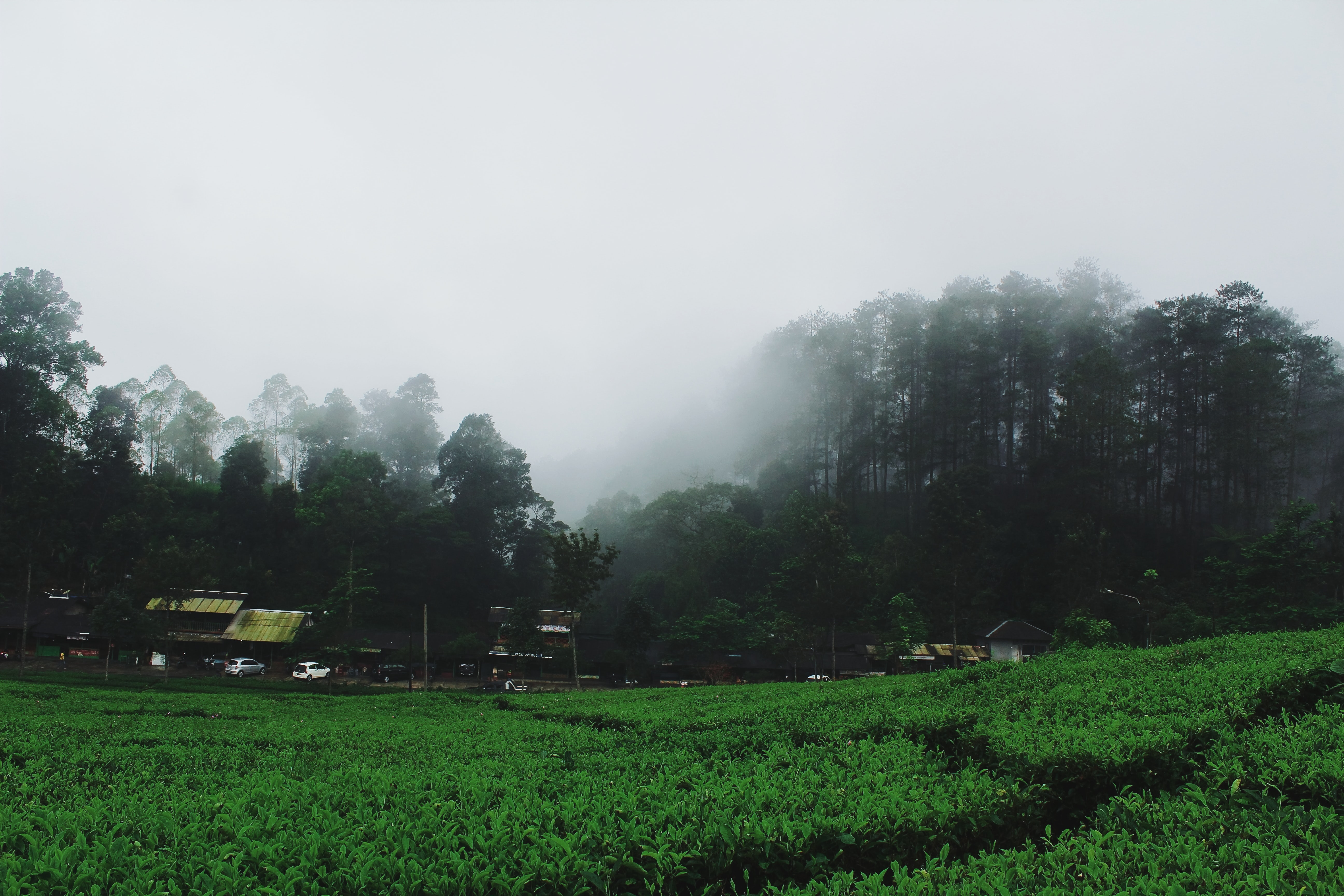 A foggy field surrounded by trees in Lembang
