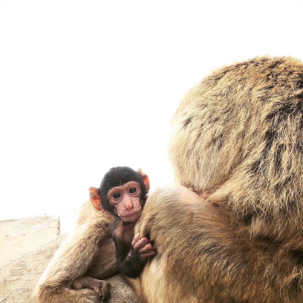 brown monkey during daytime
