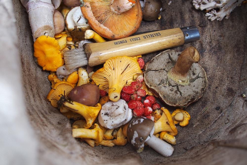 variety of shrooms
