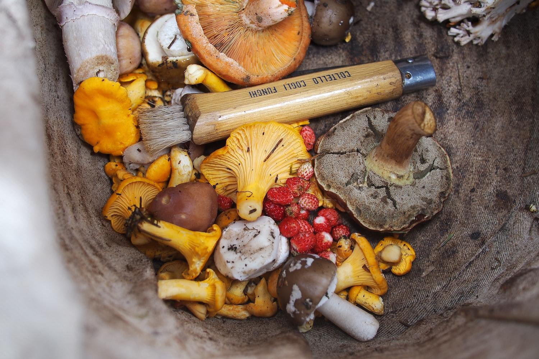 variety kinds of mushroom