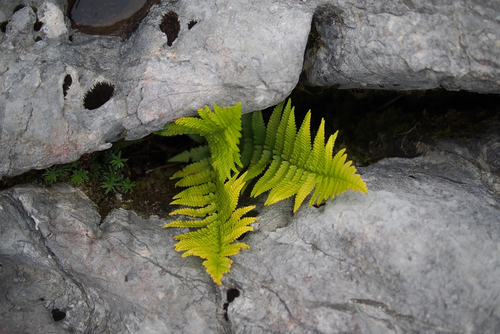 green fern between gray rocks