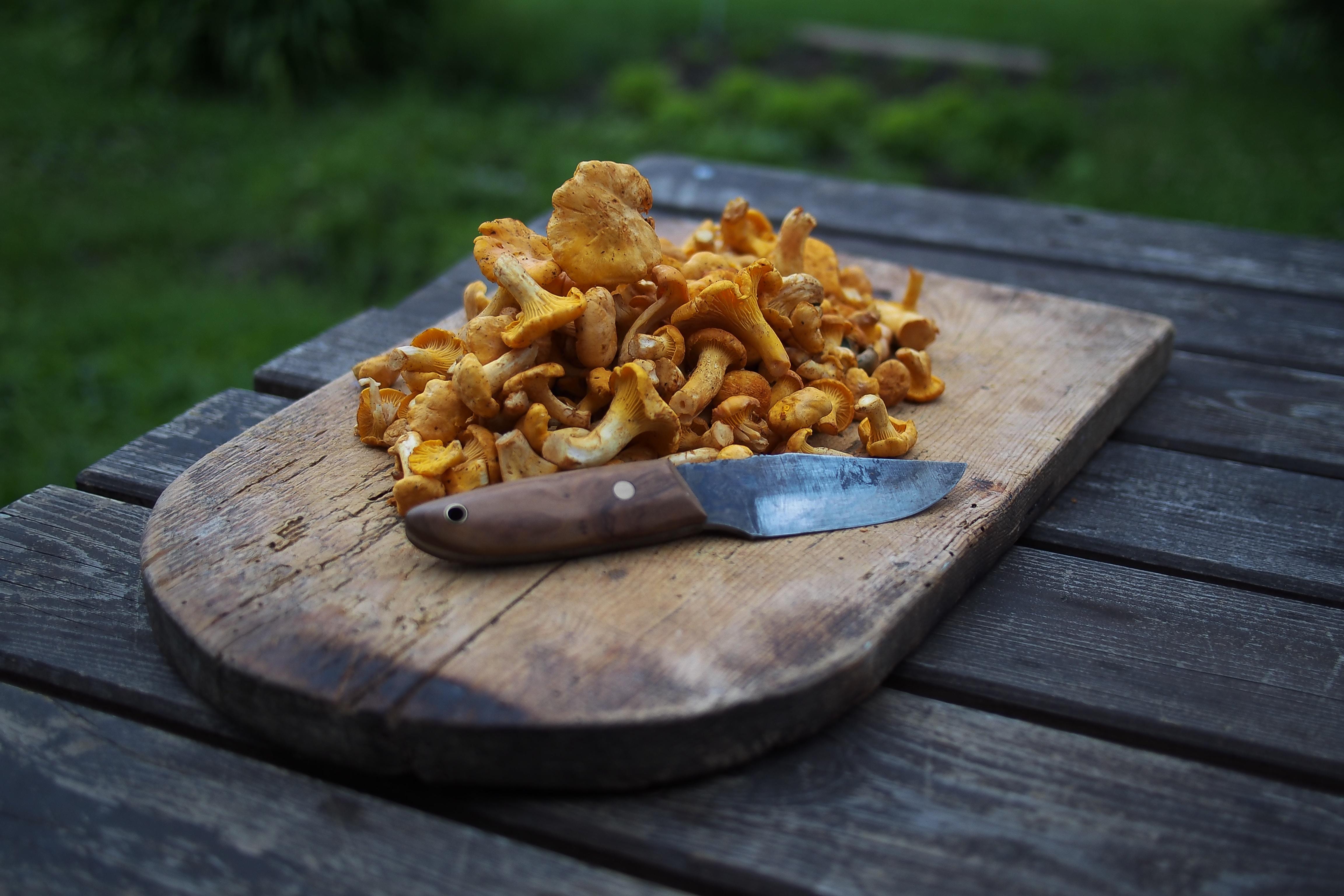 diet jamur kuping
