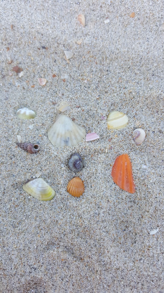 For a planet-friendly beach day do not pick up shells