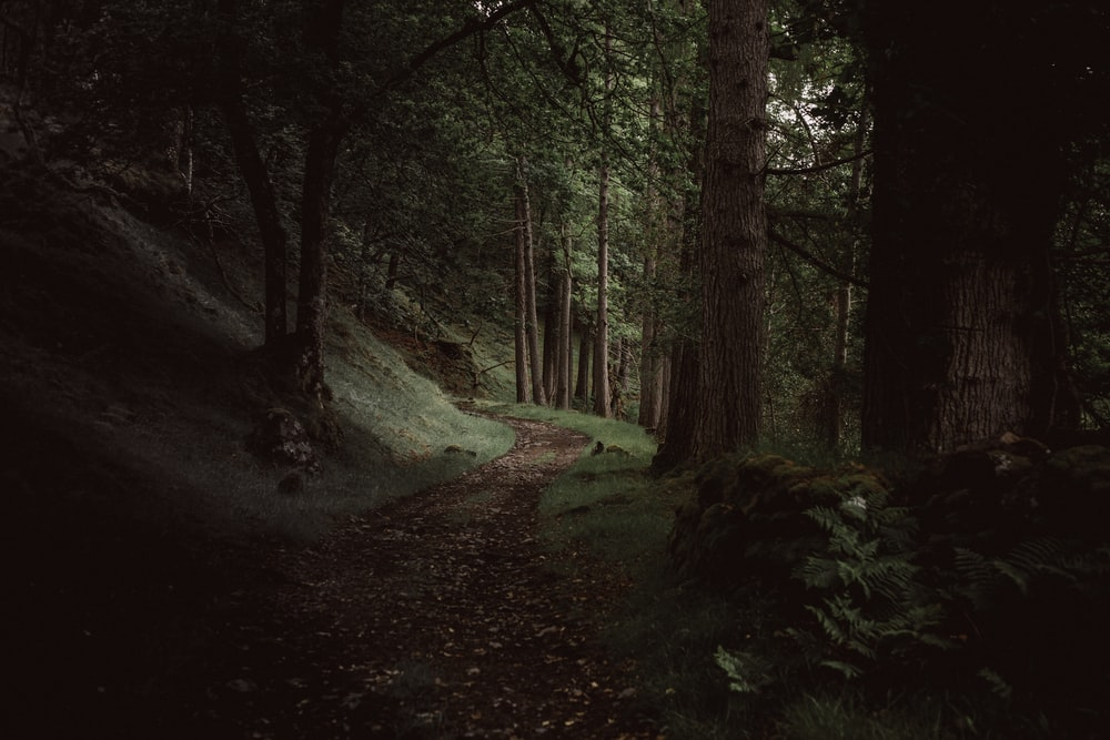 A path through a dark evergreen forest near Loch Maree