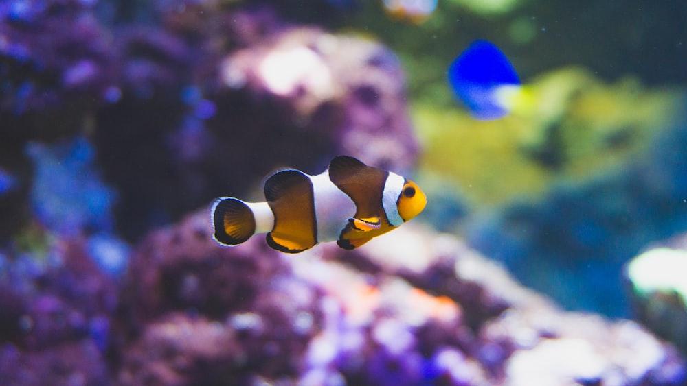 clown fish selective focus photo