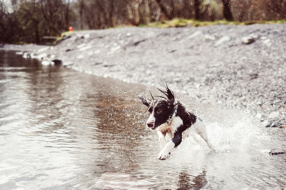 puppy running on the water during daytime