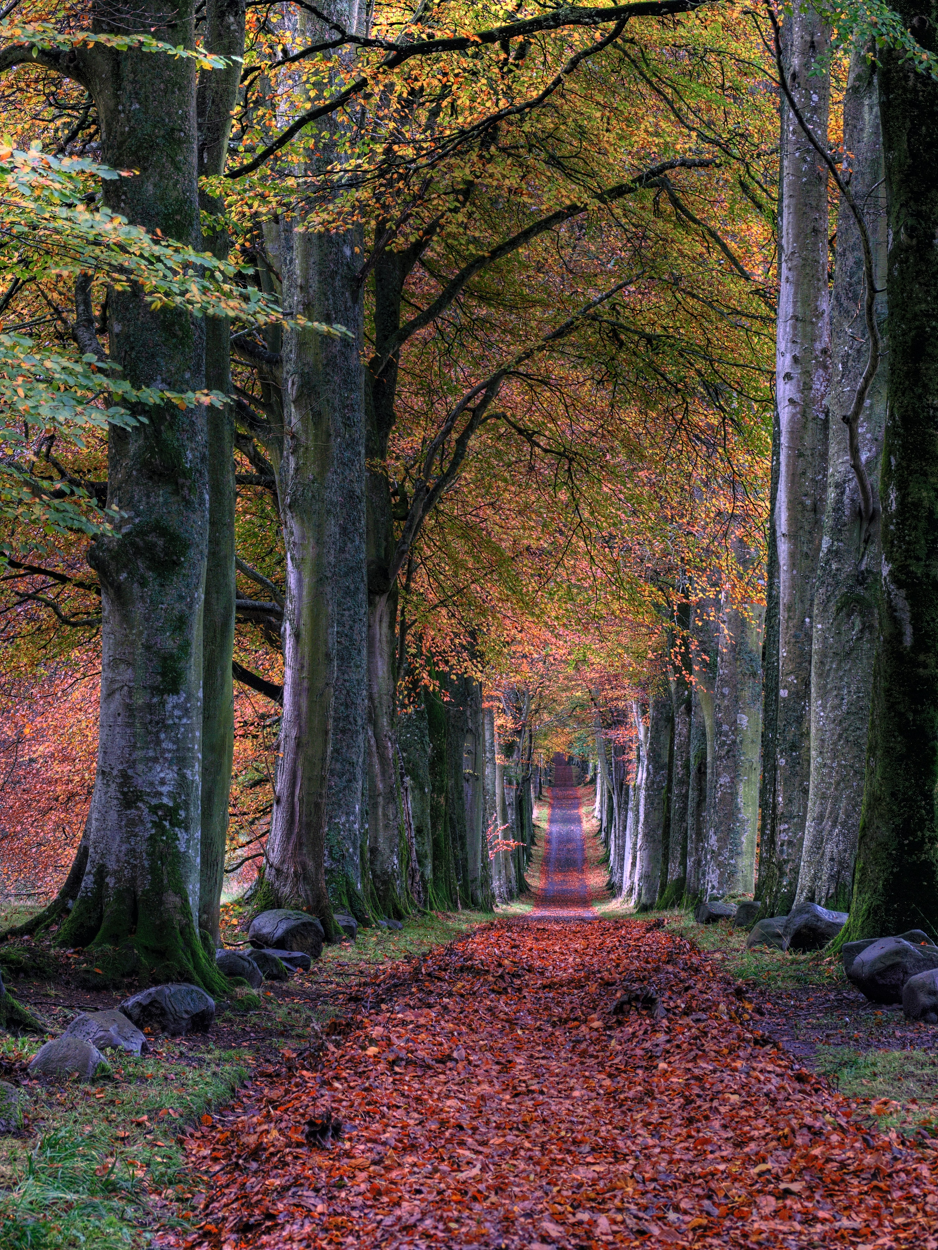A pathway through trees with autumn leaves on the ground
