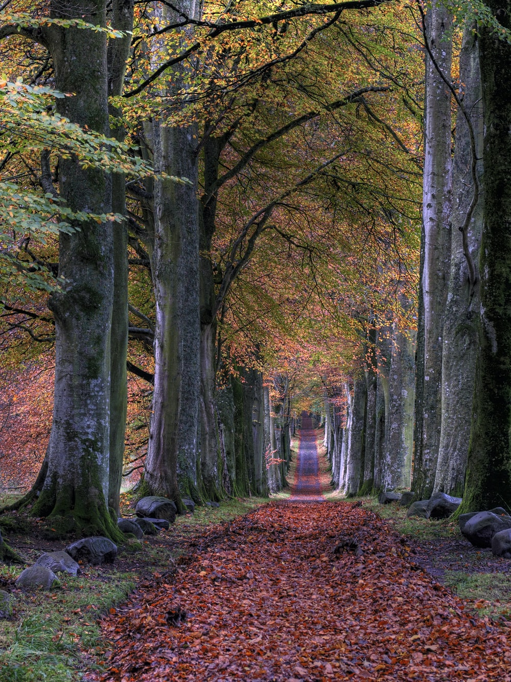 road with falling leaves in between of trees