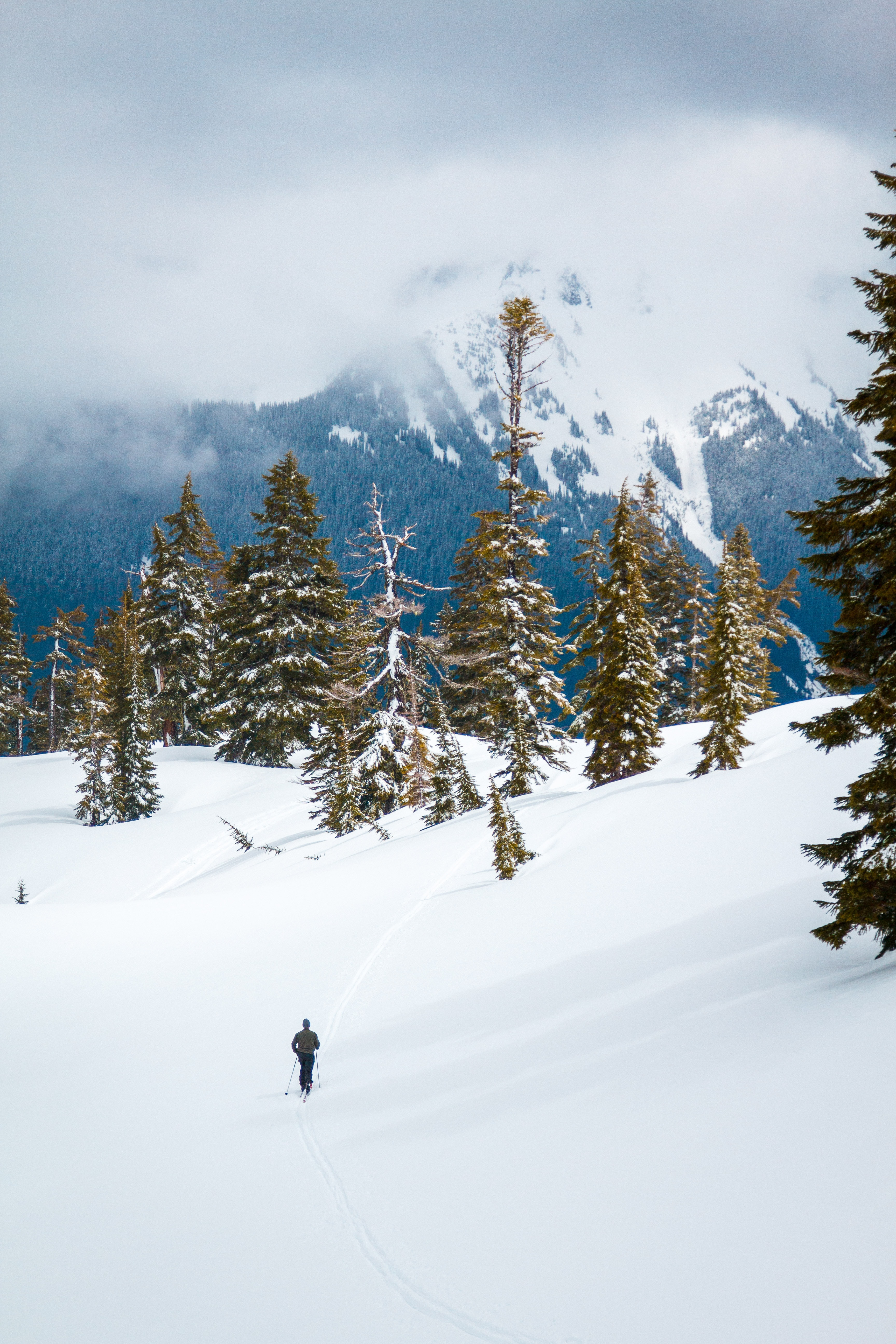 A skier on a snowy slope with sparse trees in the mountains