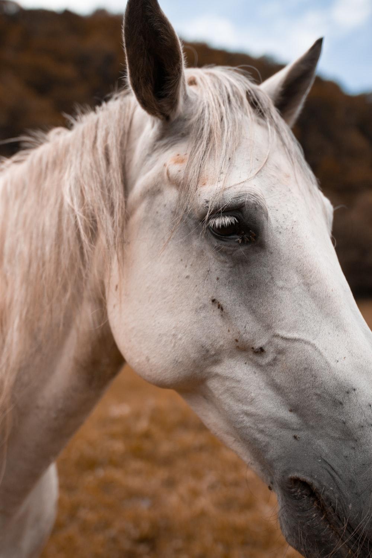 closeup photo of horse