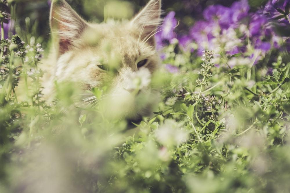 orange cat in grass field during daytime