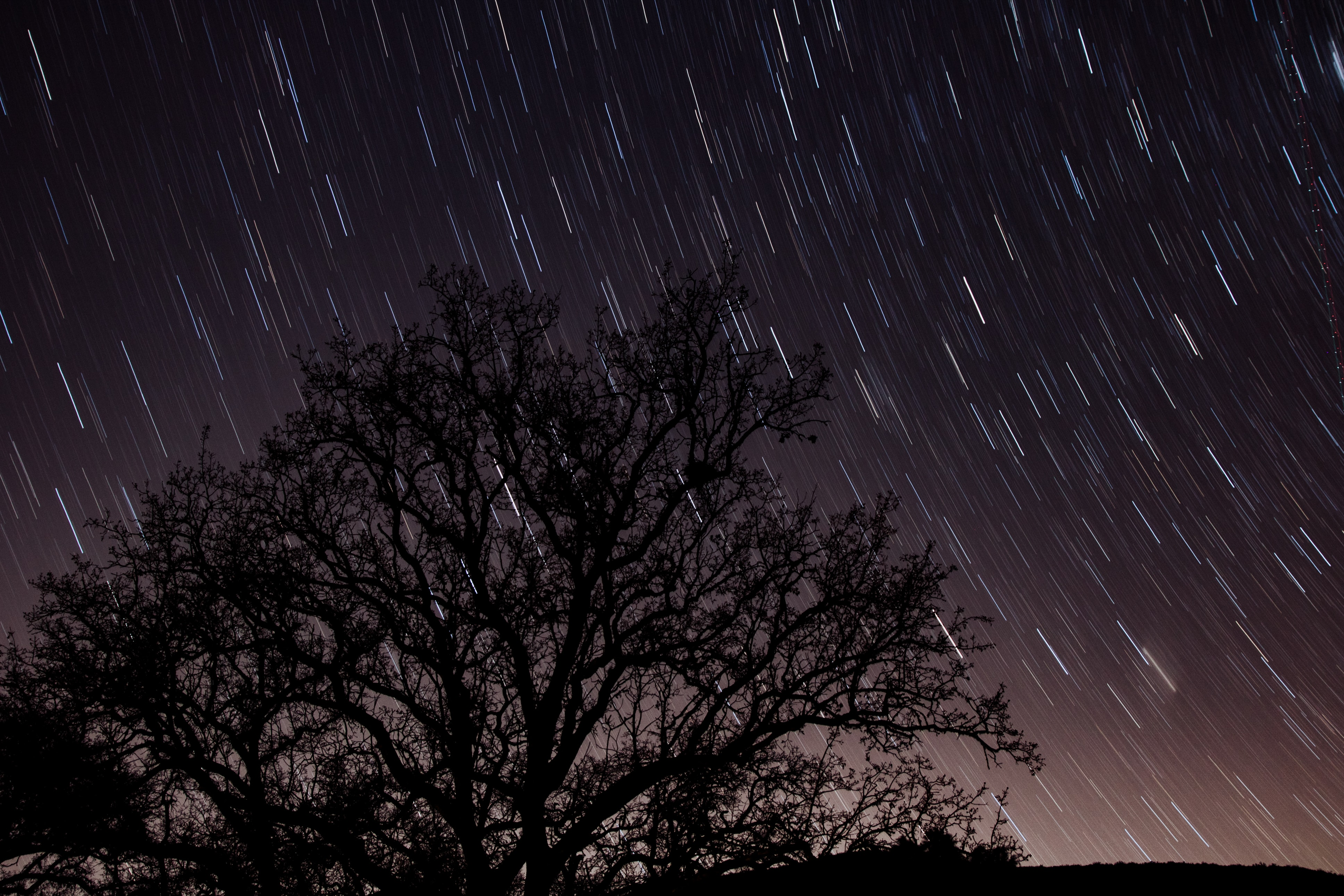 silhouette of trees raining in time lapse photography