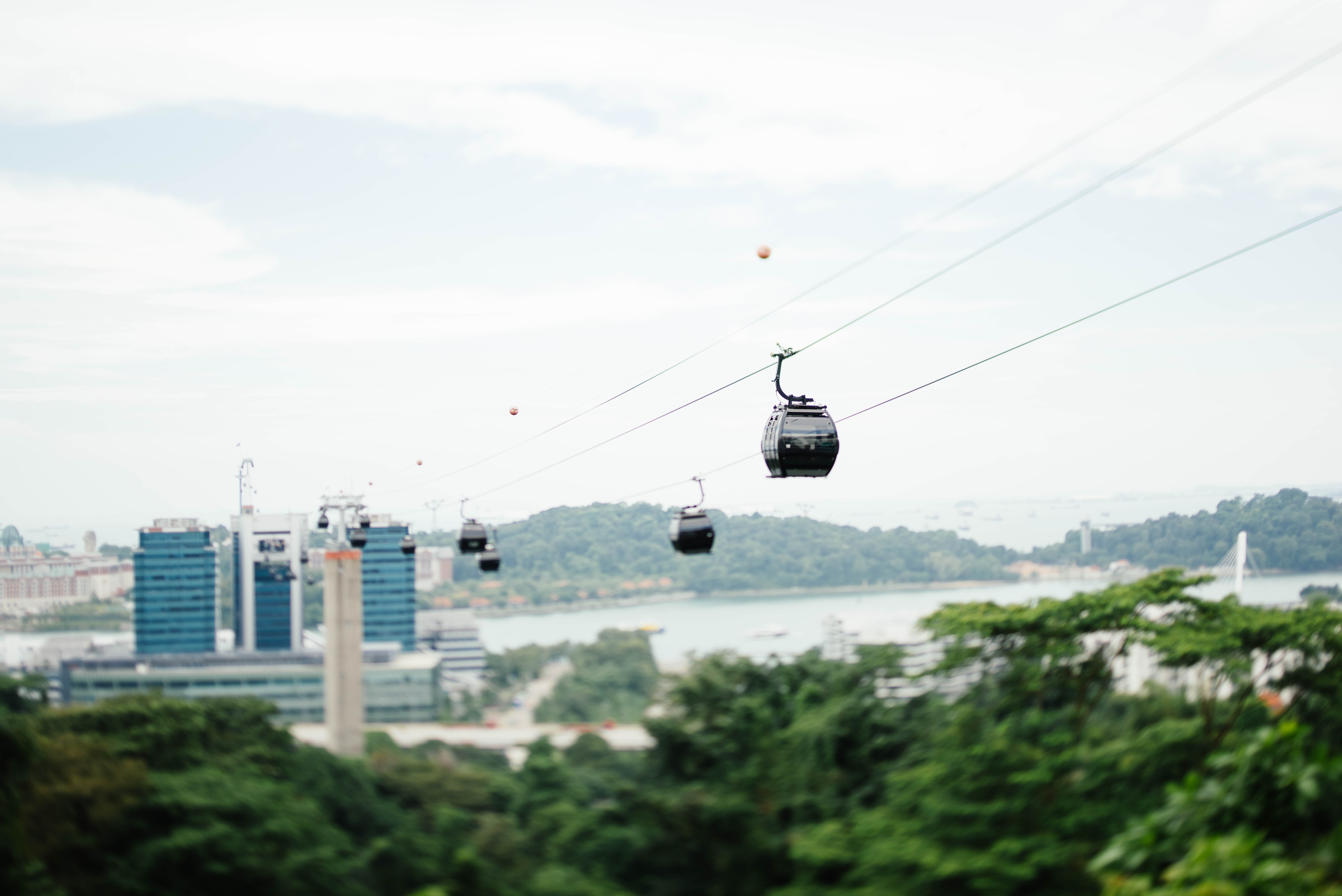 Cable cars transport commuters over lush green foliage in the city