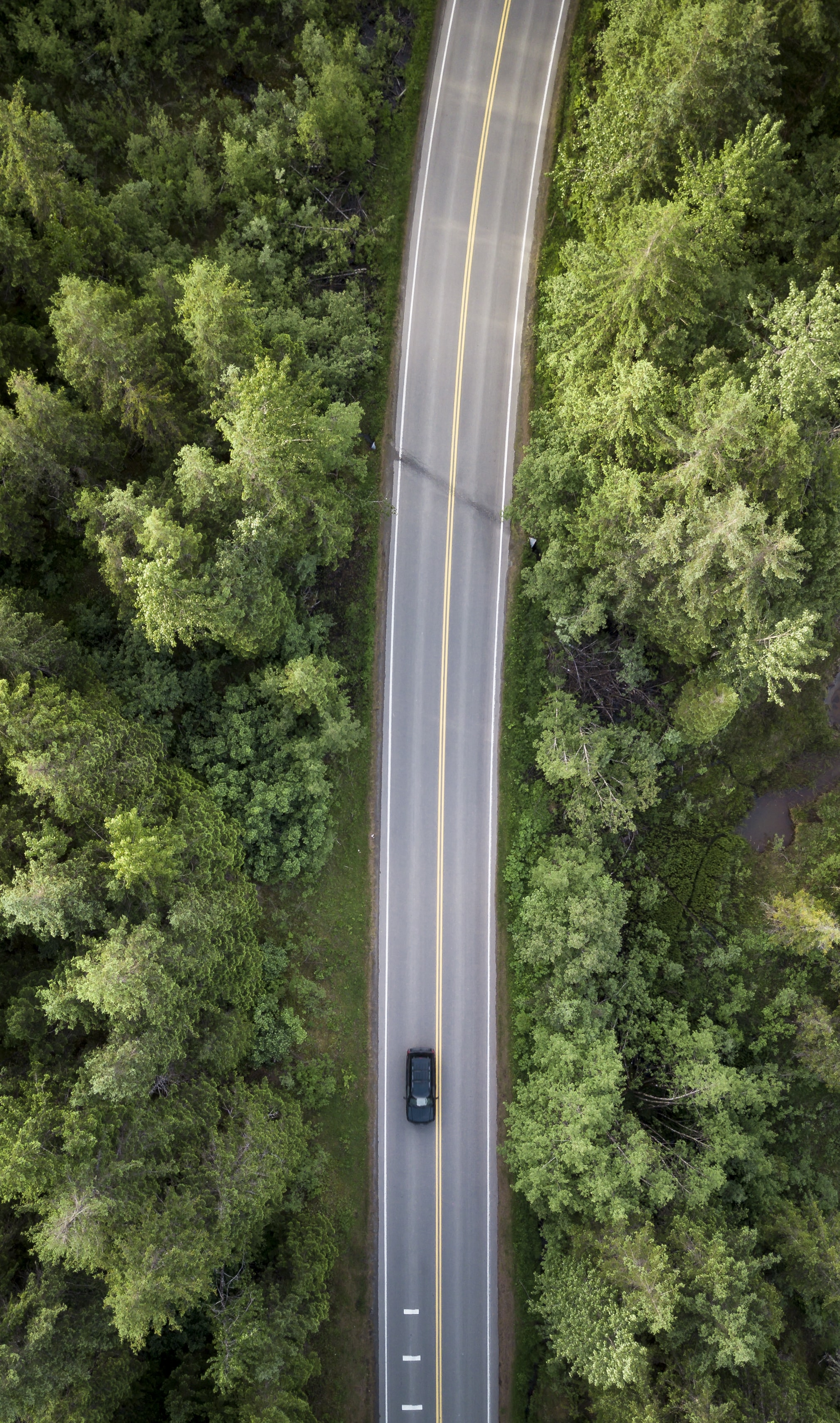A drone shot of a black car on a tree-lined road near Juneau