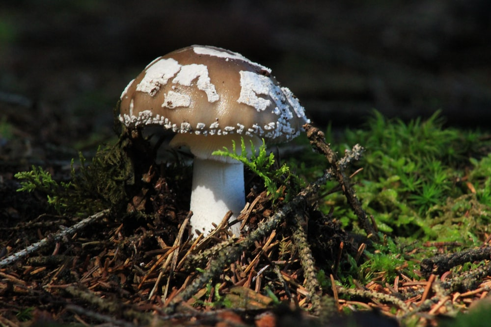 Close-up of a brown and white mushroom on the forest floor