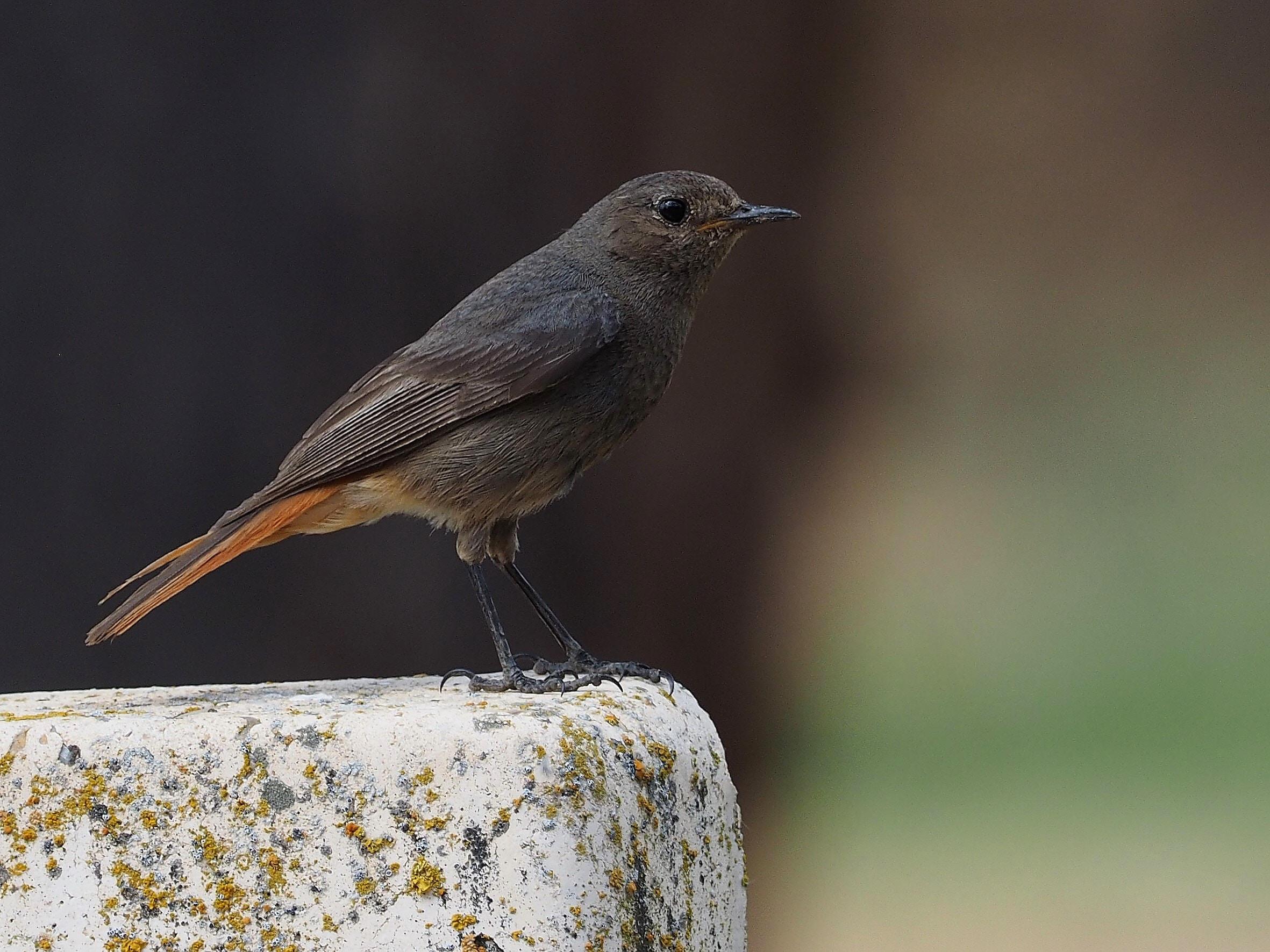 Dark brown bird on edge of a white corner